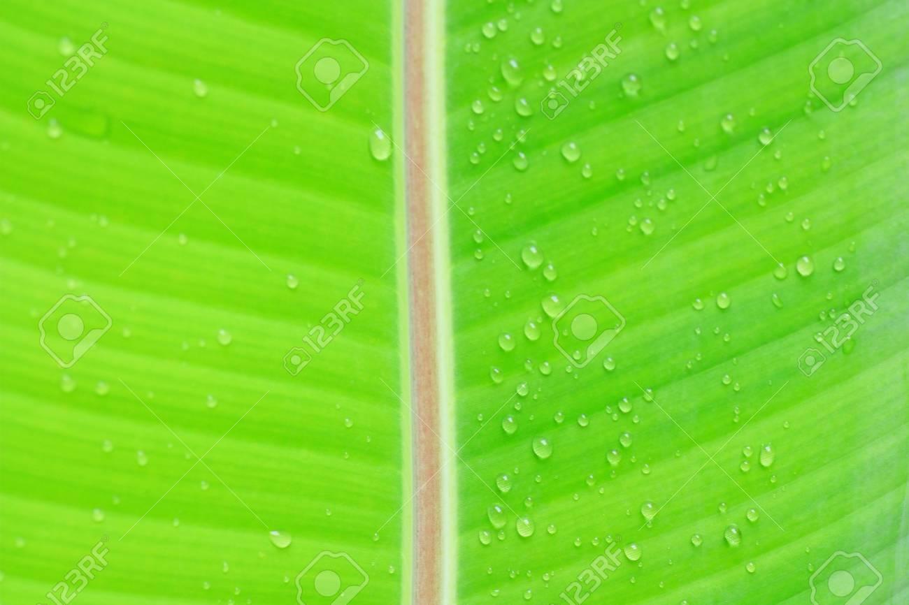 leaf in raining Season Stock Photo - 7813294