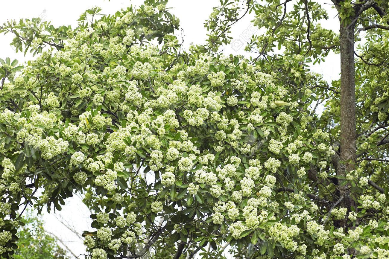 Kết quả hình ảnh cho BLACKBOARD TREE