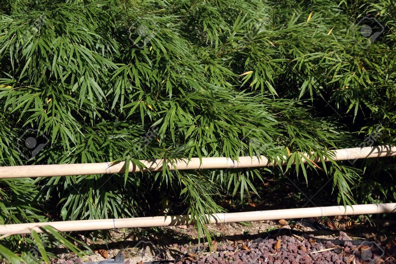 Les Details De Bambous Dans Un Jardin Zen