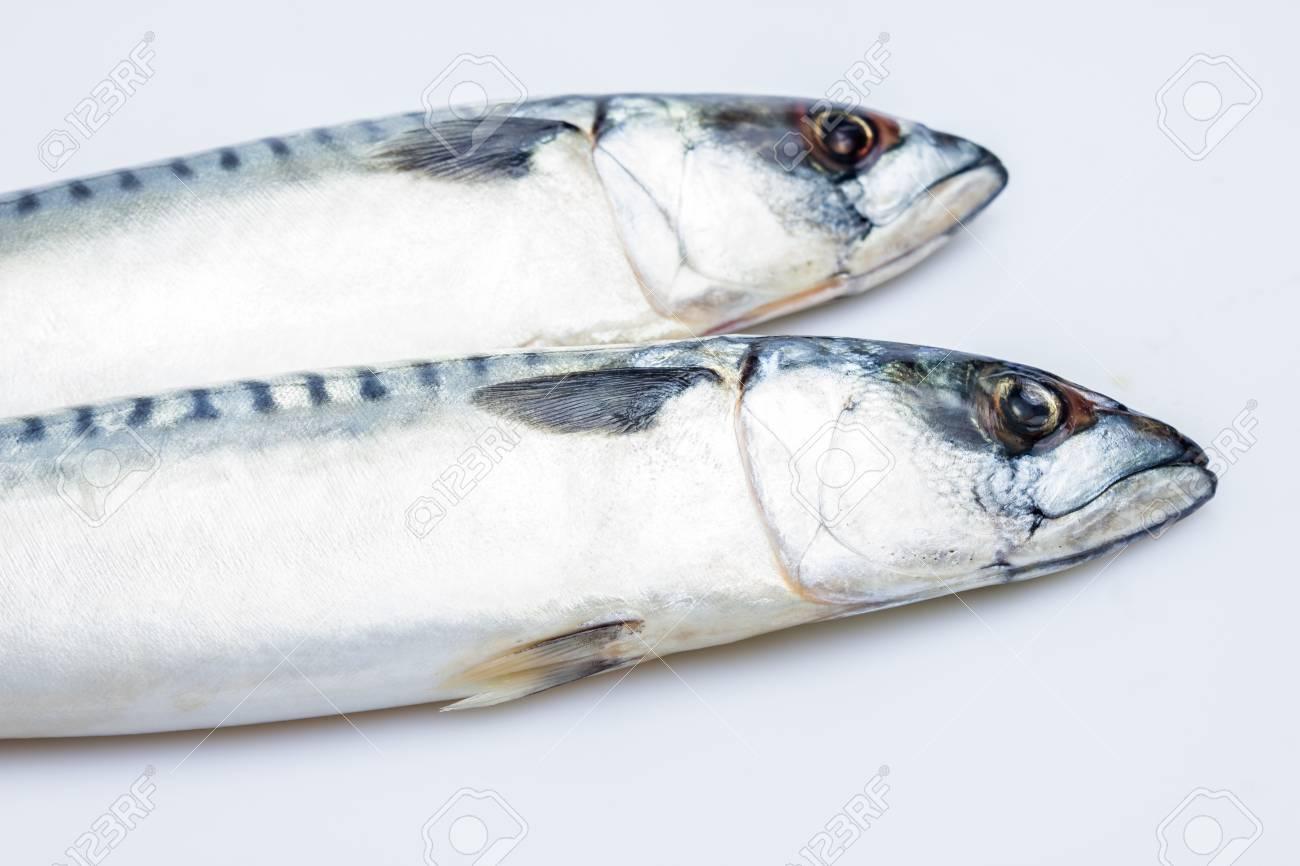 Two mackerel Stock Photo - 20165017