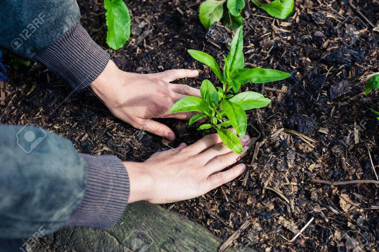 Plant some plants