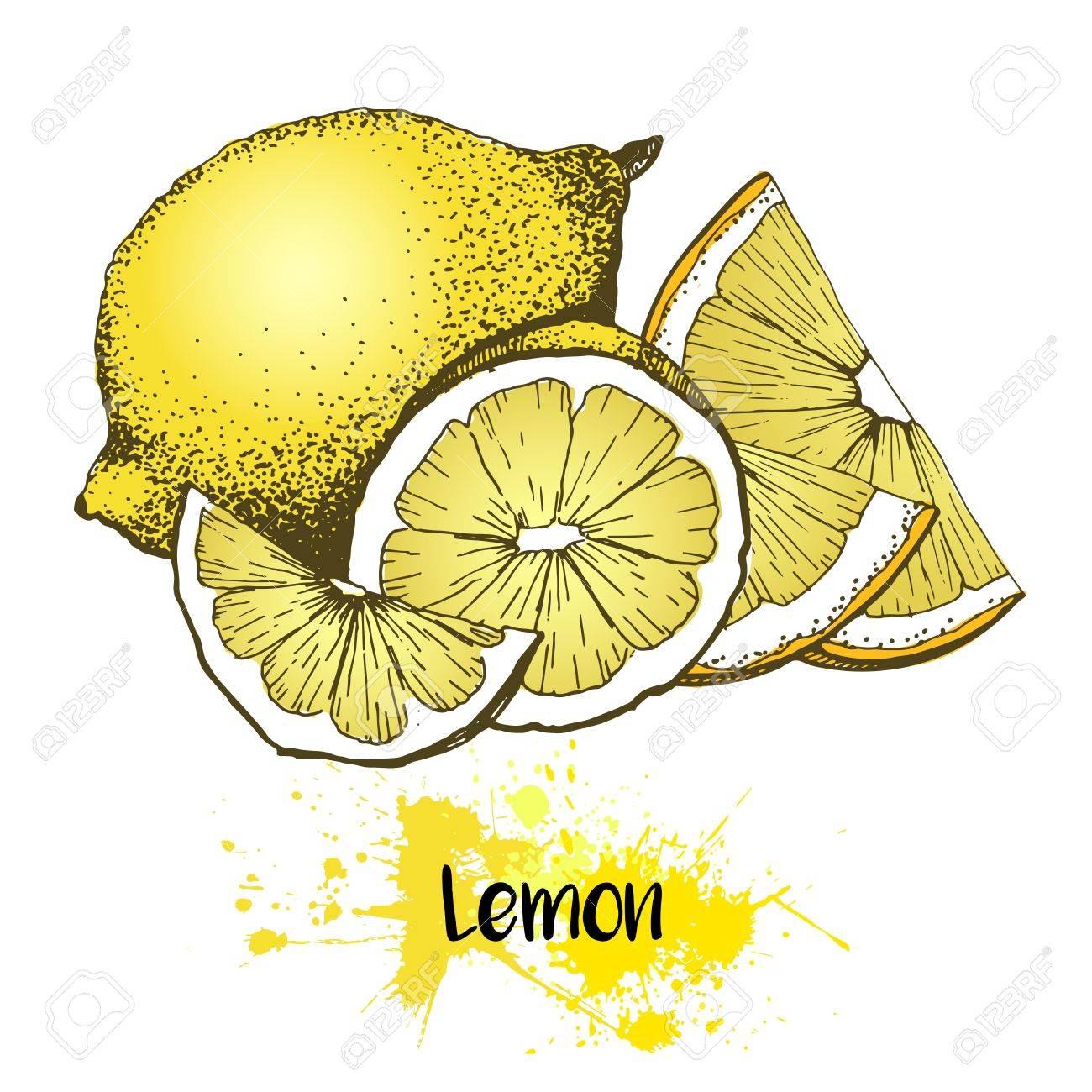 Vector Dibujado A Mano Ilustración De La Fruta De Limón O Lima. El ...