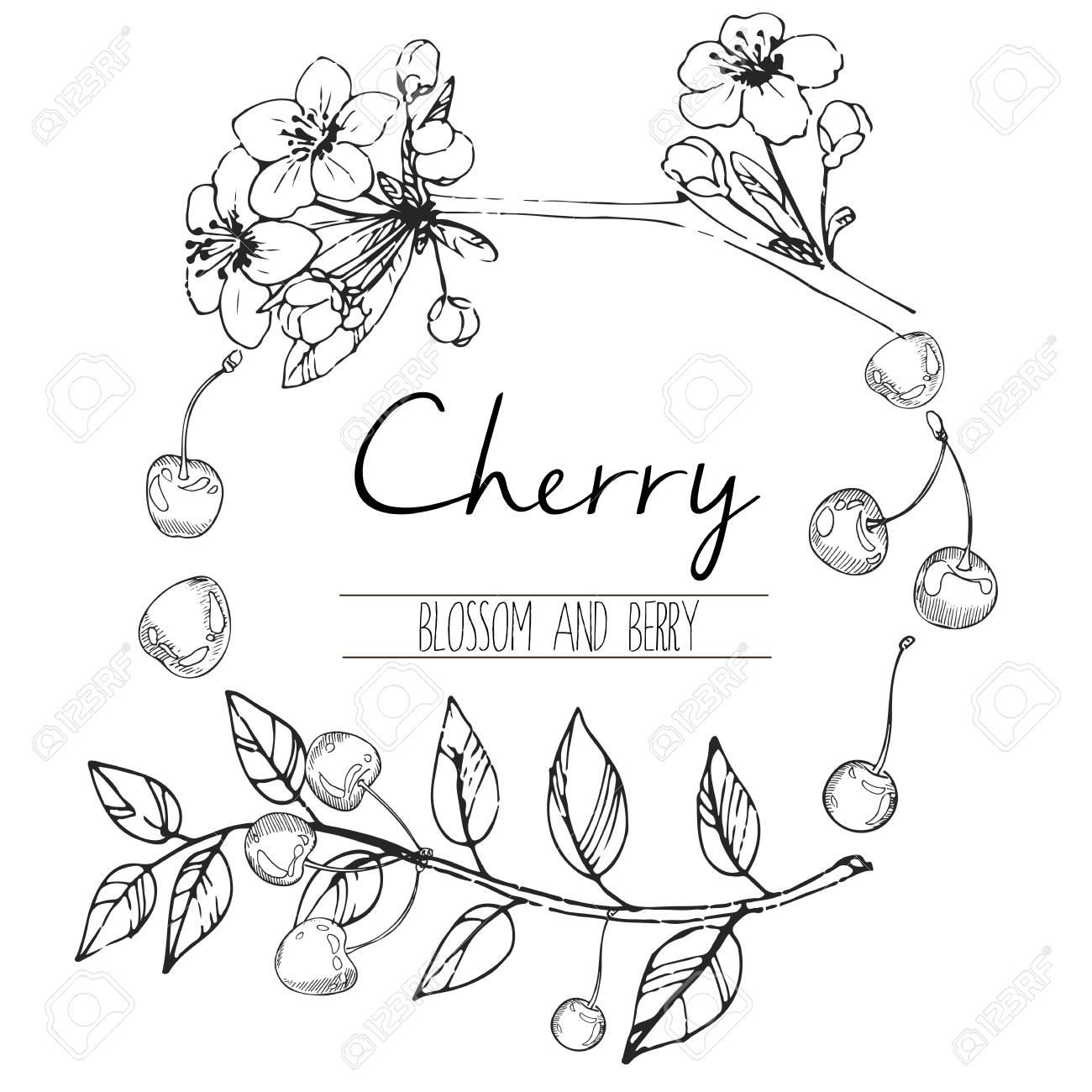Vector Illustration Ronde De Fleurs De Cerisier Et De Baies Hand Drawn Art Noir Et Blanc Gravé Dans La Composition De La Frontière Ronde La