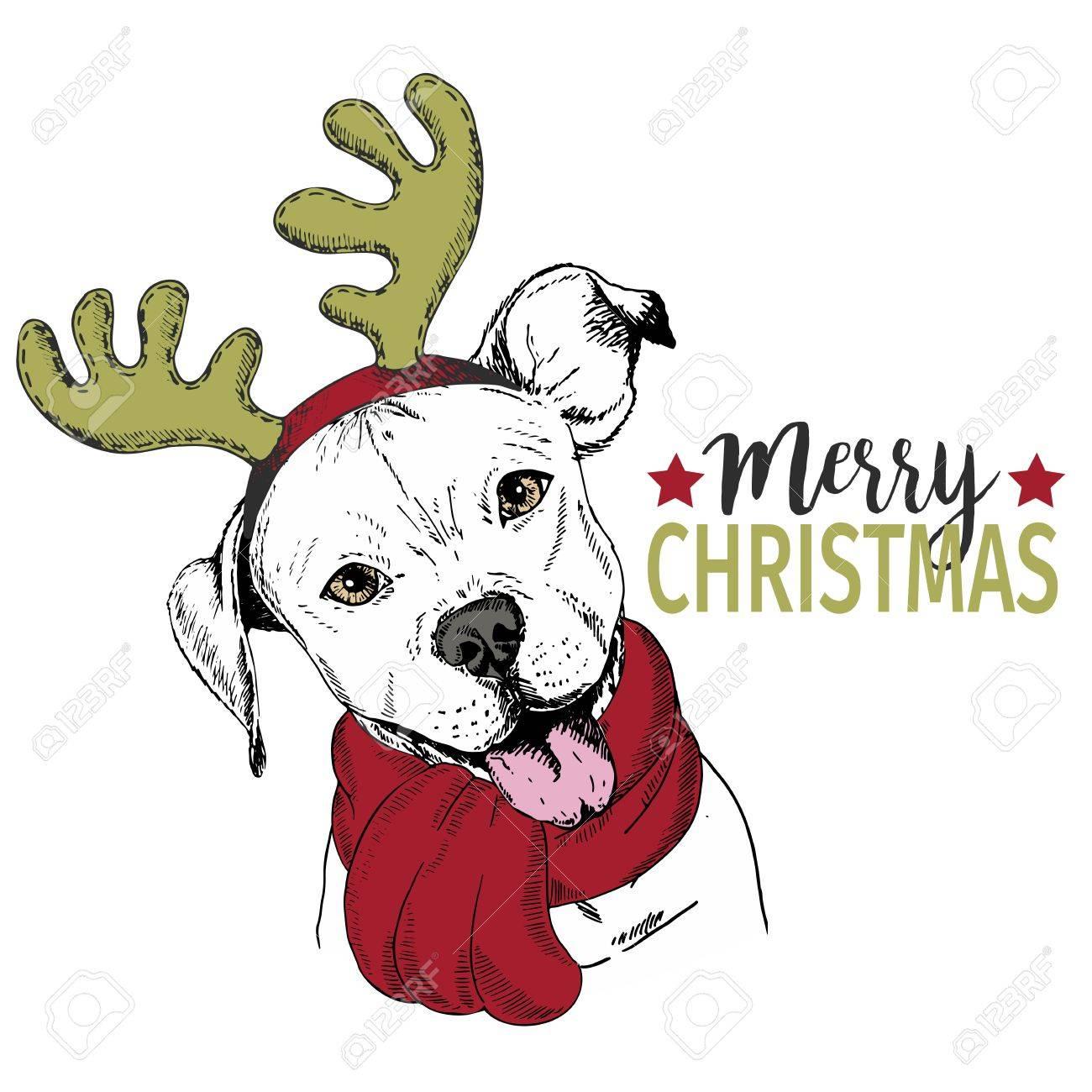 Vector Portrait Von Weihnachtshund. Pitbull Hund Trägt ...