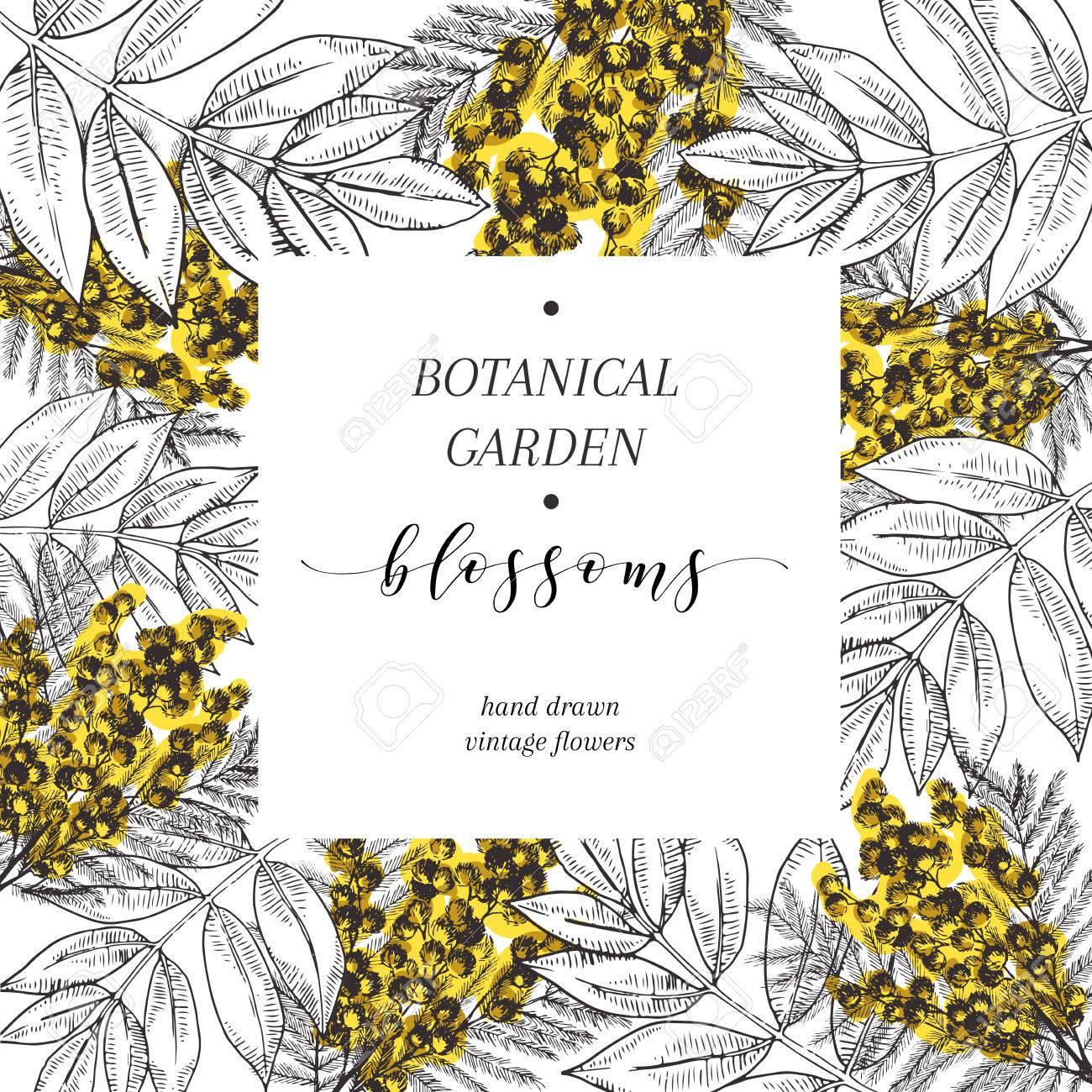 Vector Hand Drawn Blossoms Poster Engraved Botanical Art Vintage