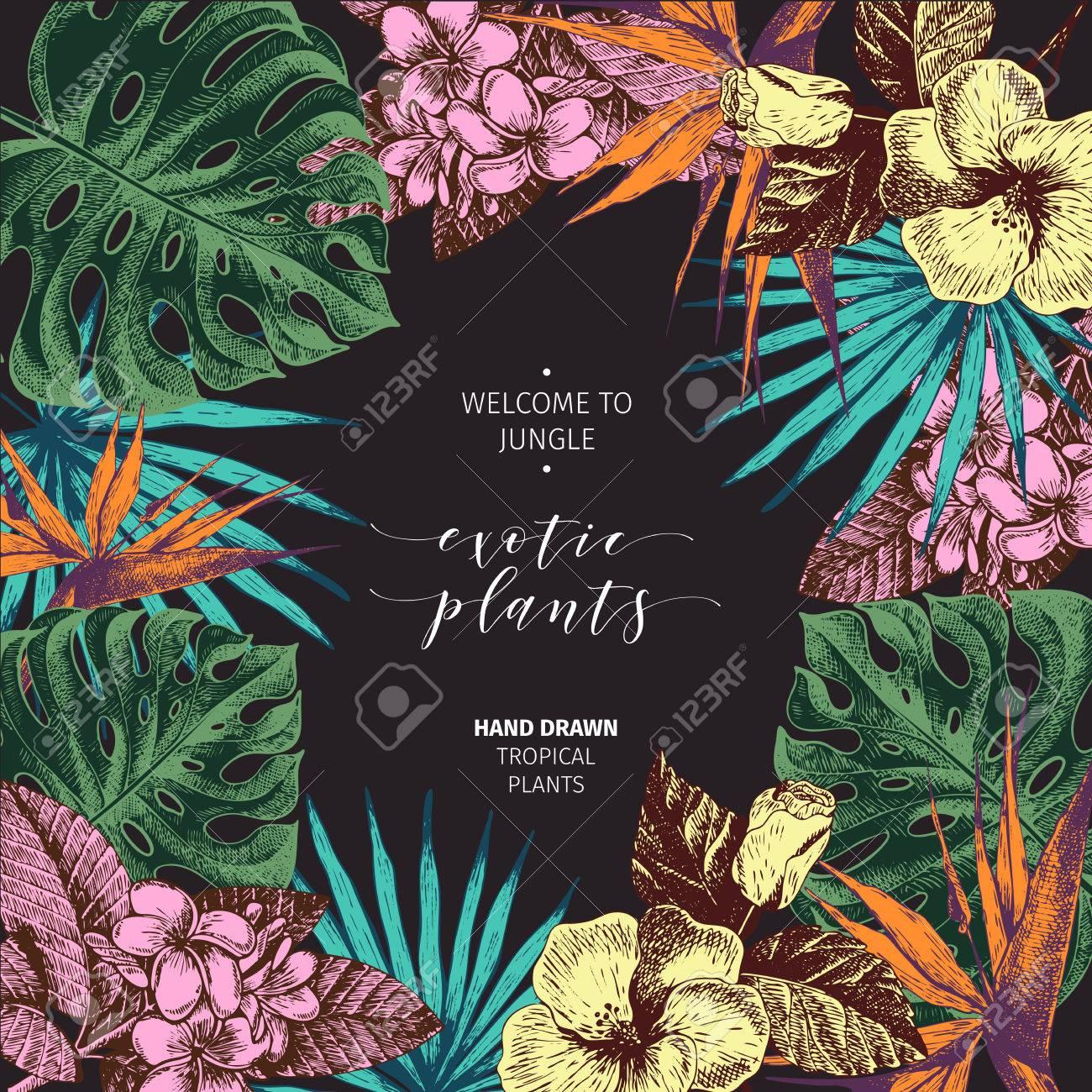 Vecotr Hand Gezeichnete Tropische Pflanzen Poster. Exotische ...