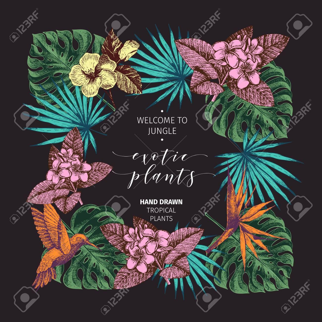 Vecotr-Hand Gezeichnetes Tropisches Pflanzenplakat. Exotisch ...