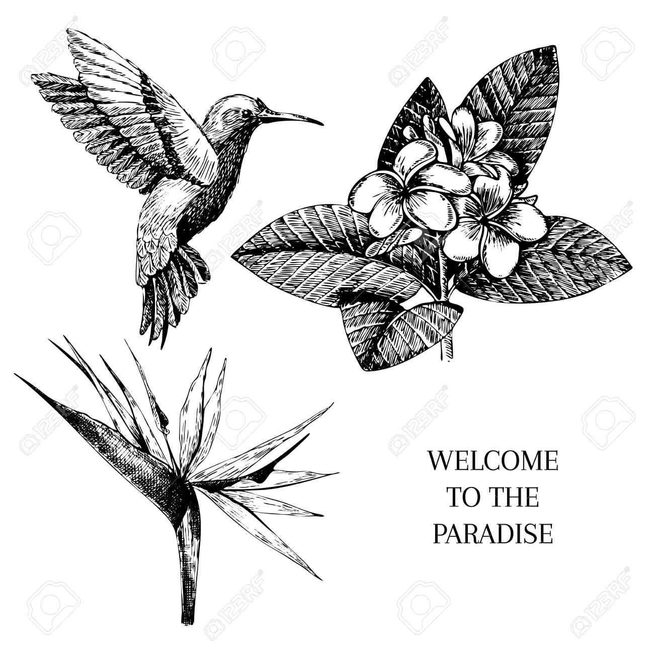 Vecotr Handgezeichnete Tropische Pflanze Symbole. Exotische ...