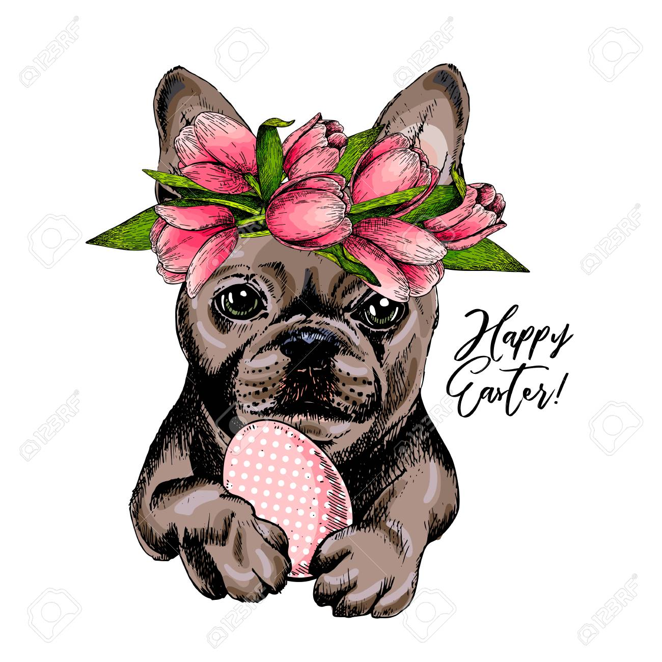Portrait Of French Bulldog Dog With Easter Egg Wearing Tulip Royalty Free Cliparts Vectors And Stock Illustration Image 95874157