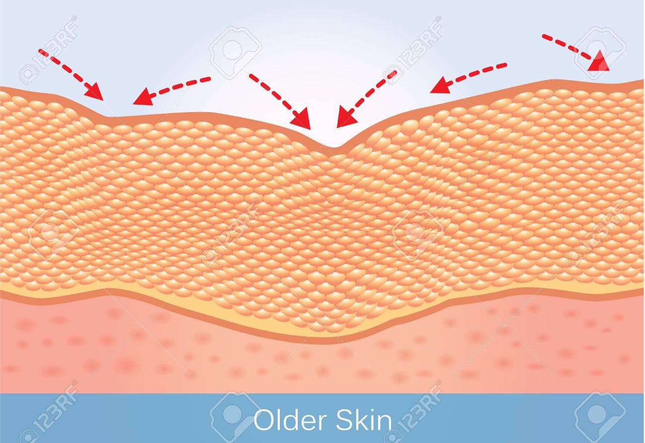 しわや高齢者の肌のたるみこのイラストの美しさと健康管理についての