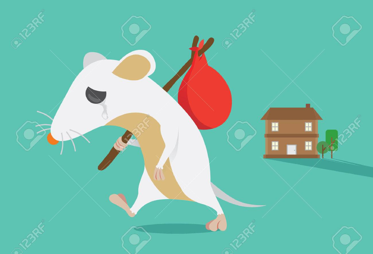 Rat moving out of home  Rat crying  This illustration about keep