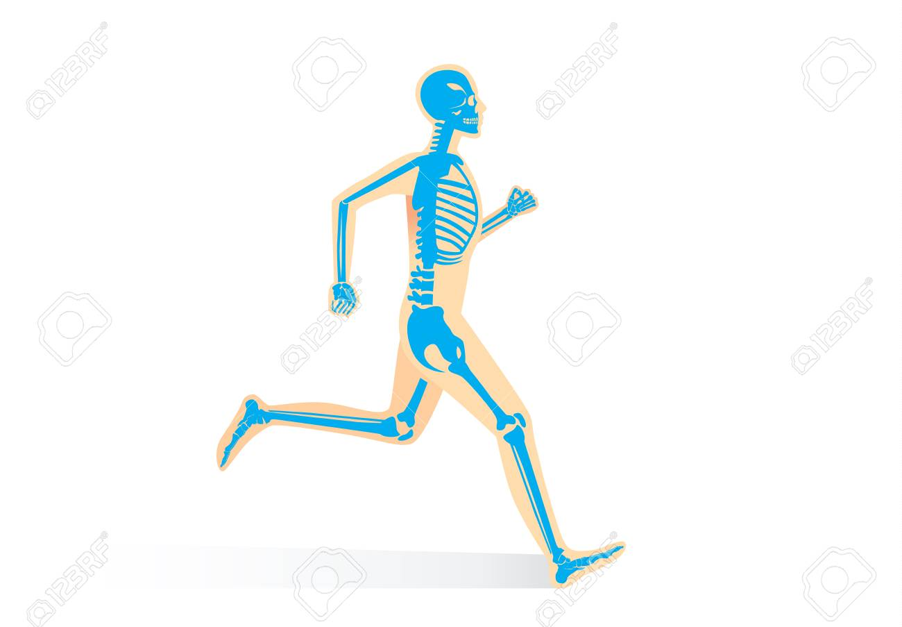 Menschliche Knochen-Anatomie Beim Lauf Lokalisiert. Illustration ...