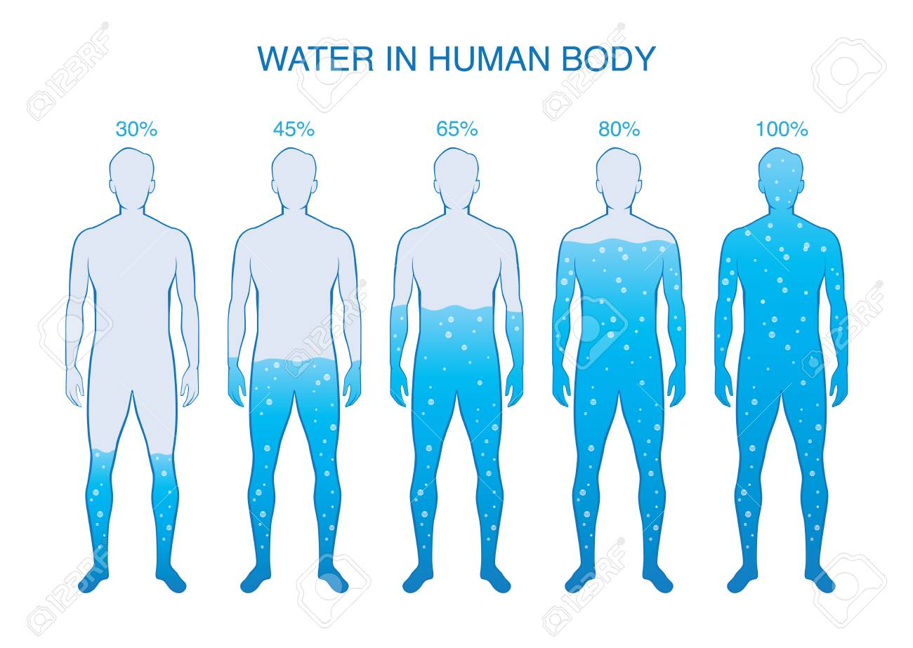 Difference Percentage Of Water In The Human Body Illustration