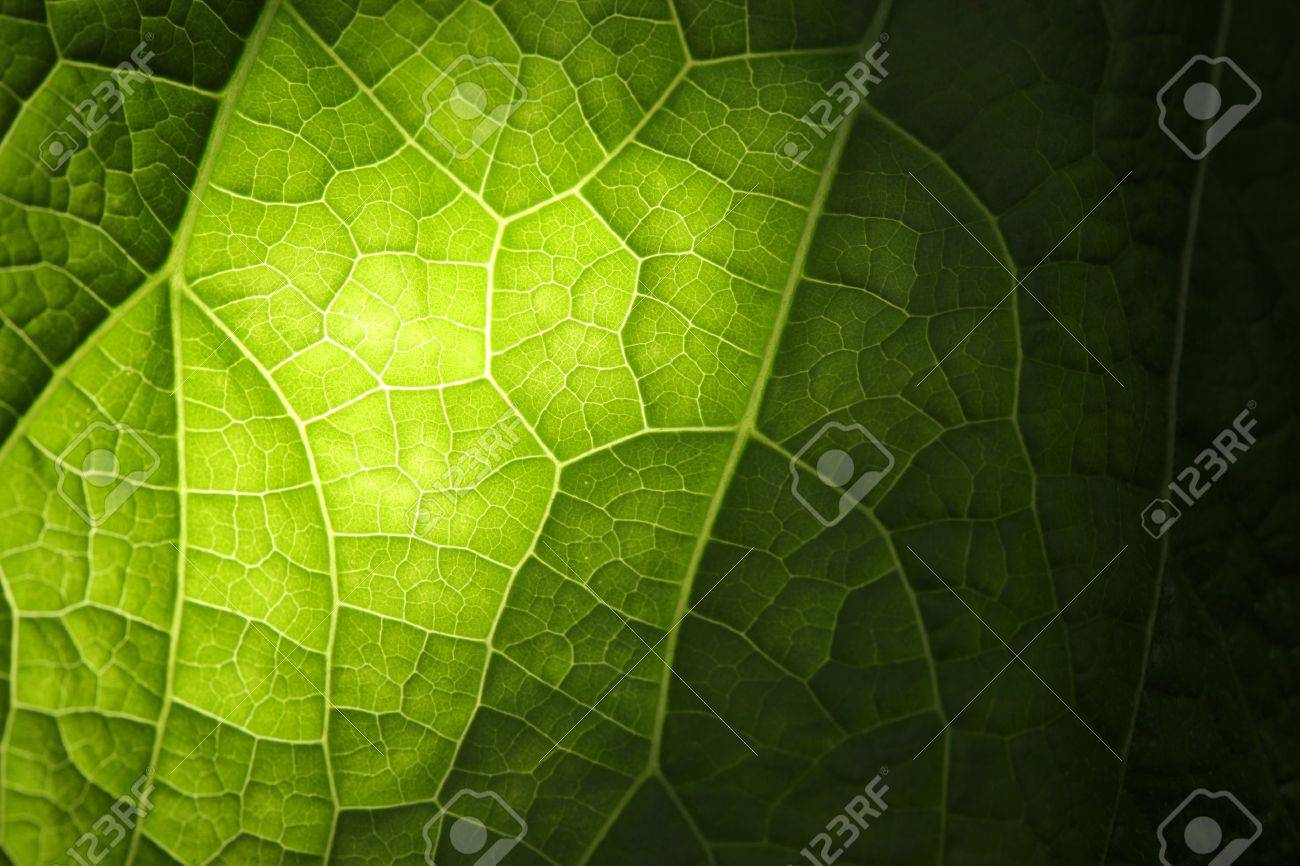 Green leaf background texture, macro Stock Photo - 7412020