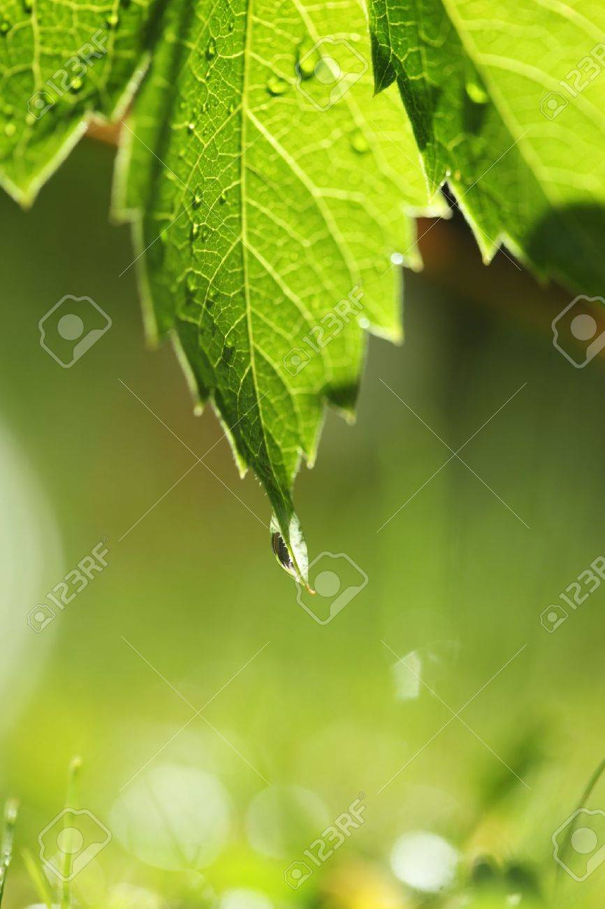 Green leaf with water drop over bright grass. Shallow DOF. Stock Photo - 7622228
