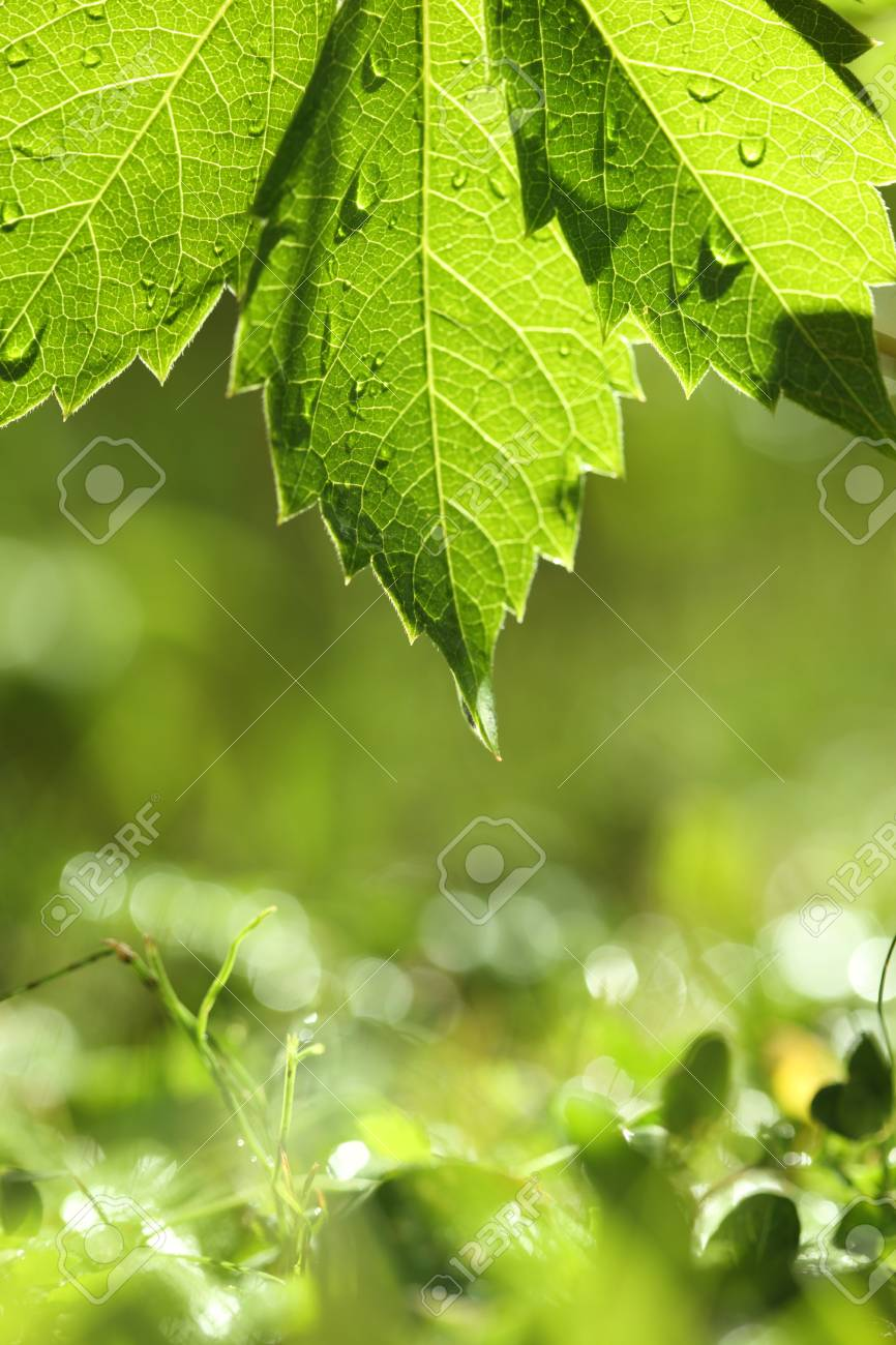 Green leaf over bright wet grass. Shallow DOF. Stock Photo - 7622241