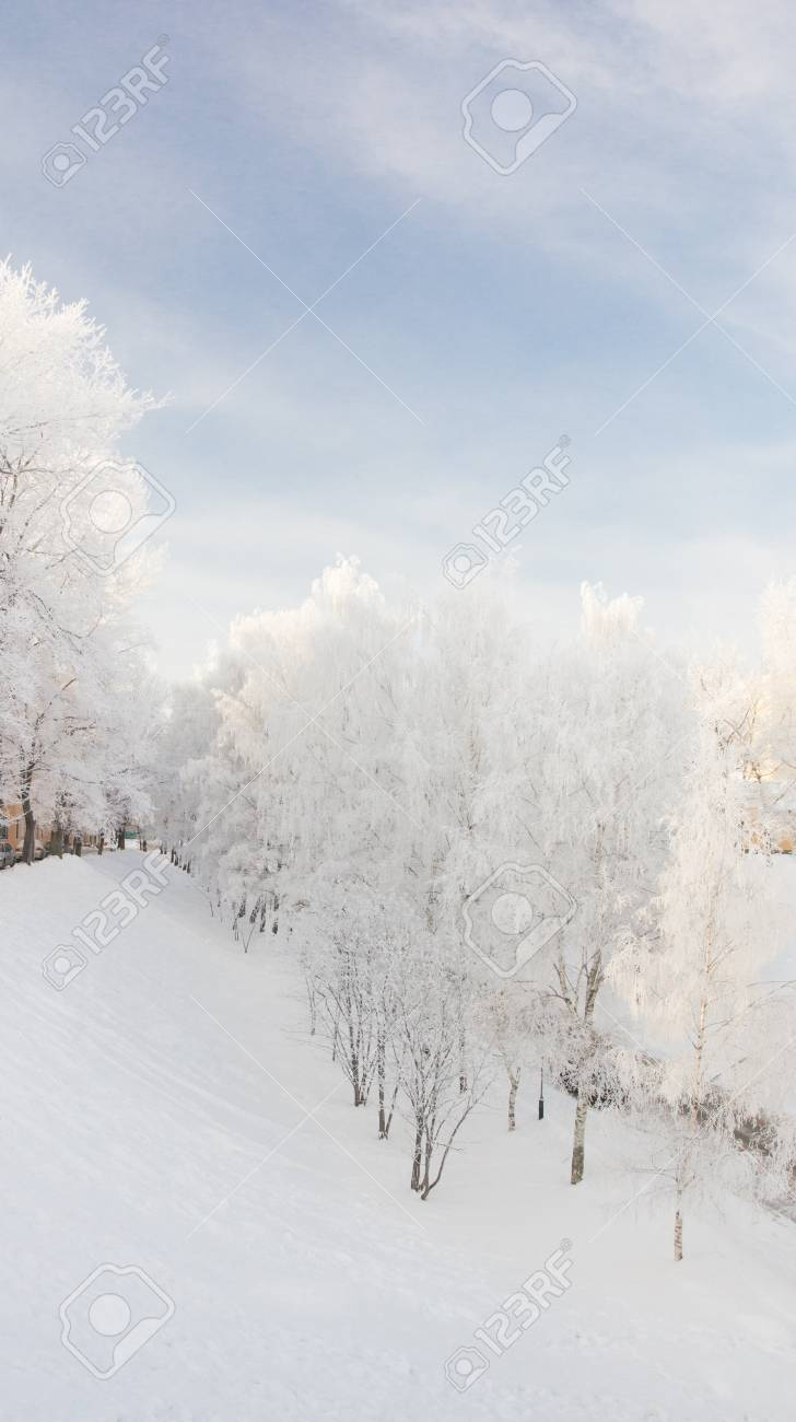Snowy trees stand in a line on the quay of Yaroslavl in winter day. Russia Stock Photo - 17345211
