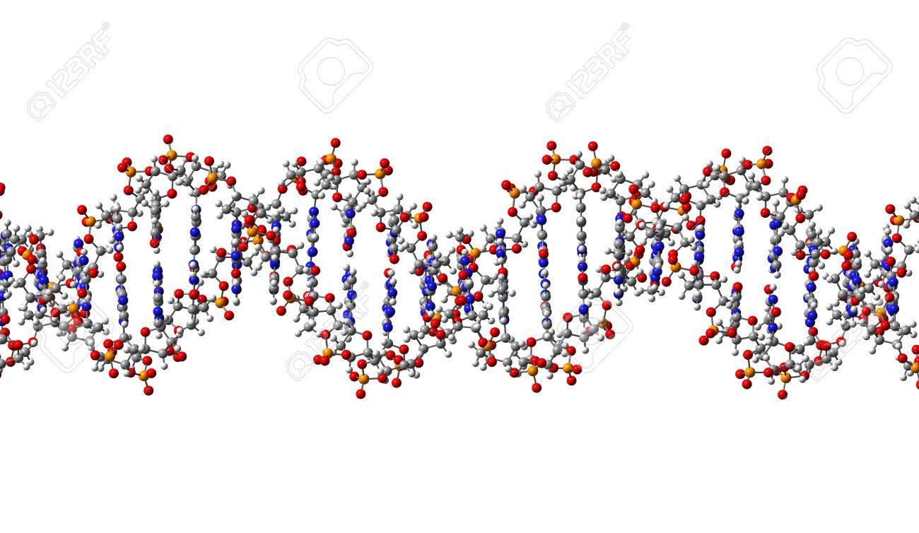 DNA molecule, structural fragment, 3D illustration Stock Illustration - 27538395