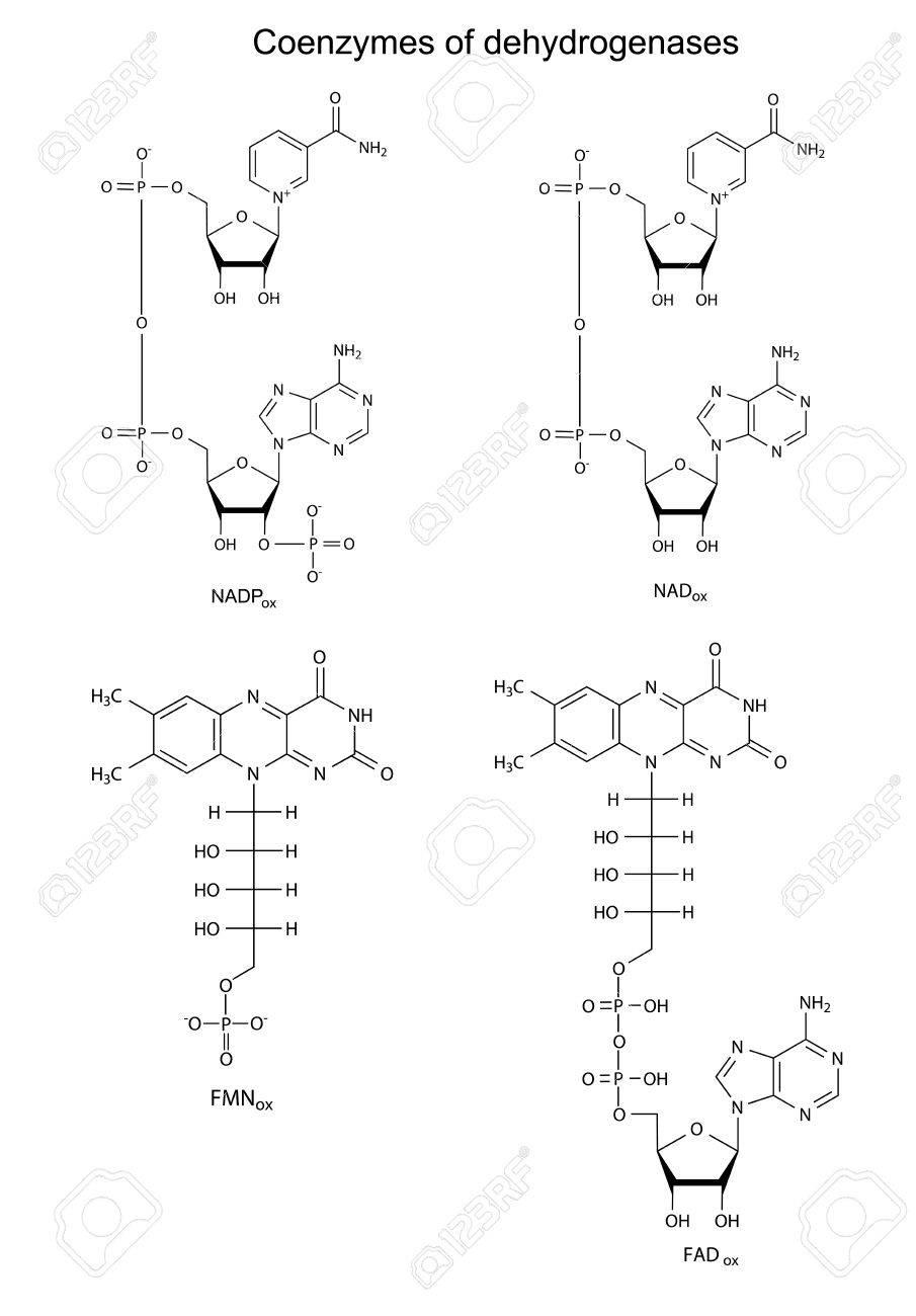 主な脱水素酵素の補酵素 Nad のイラストnadp流行fmn化学式
