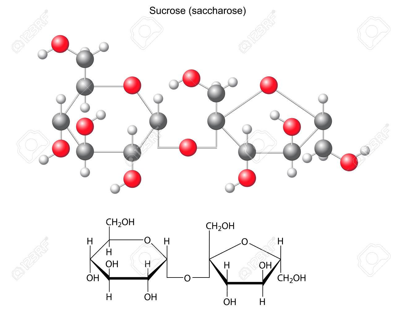 Fórmula Química Estructural Y El Modelo De La Sacarosa Sacarosa