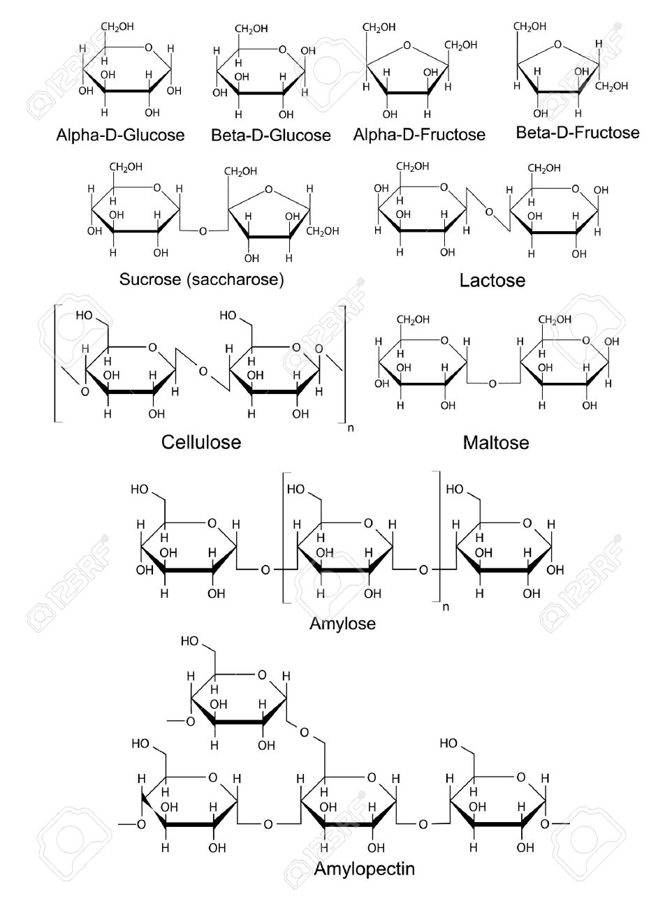 Chemical structural formulas of basic carbohydrates glucose chemical structural formulas of basic carbohydrates glucose fructose sucrose lactose maltose biocorpaavc Images