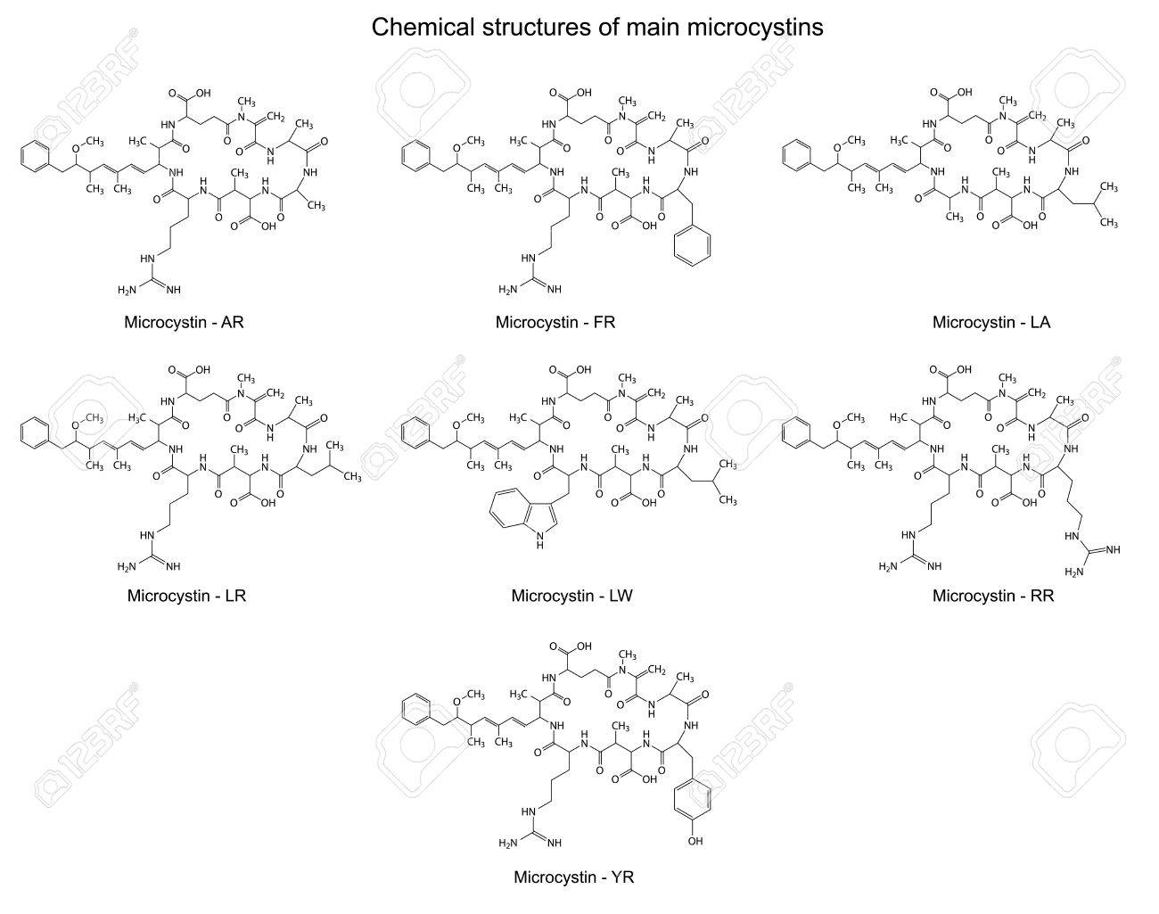 Chemical structural formulas of main microcystins - cyanotoxins, 2d illustration, skeletal style, isolated on white background - 31084371