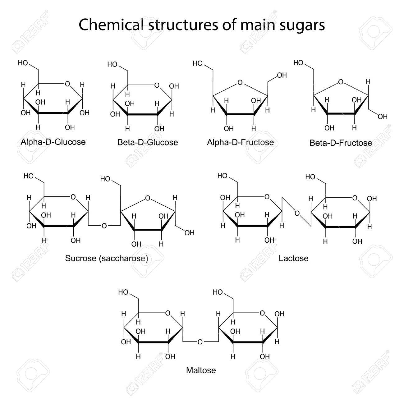 Chemical structures of main sugars: mono- and disaccharides, 2d illustration, isolated on white background, skeletal style - 31084546