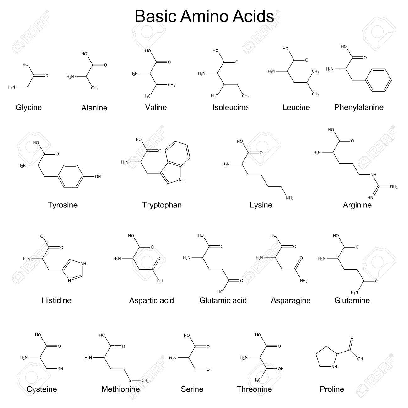 Skeletal strutures of basic amino acids, 2d, vector, eps 8 - 40614606