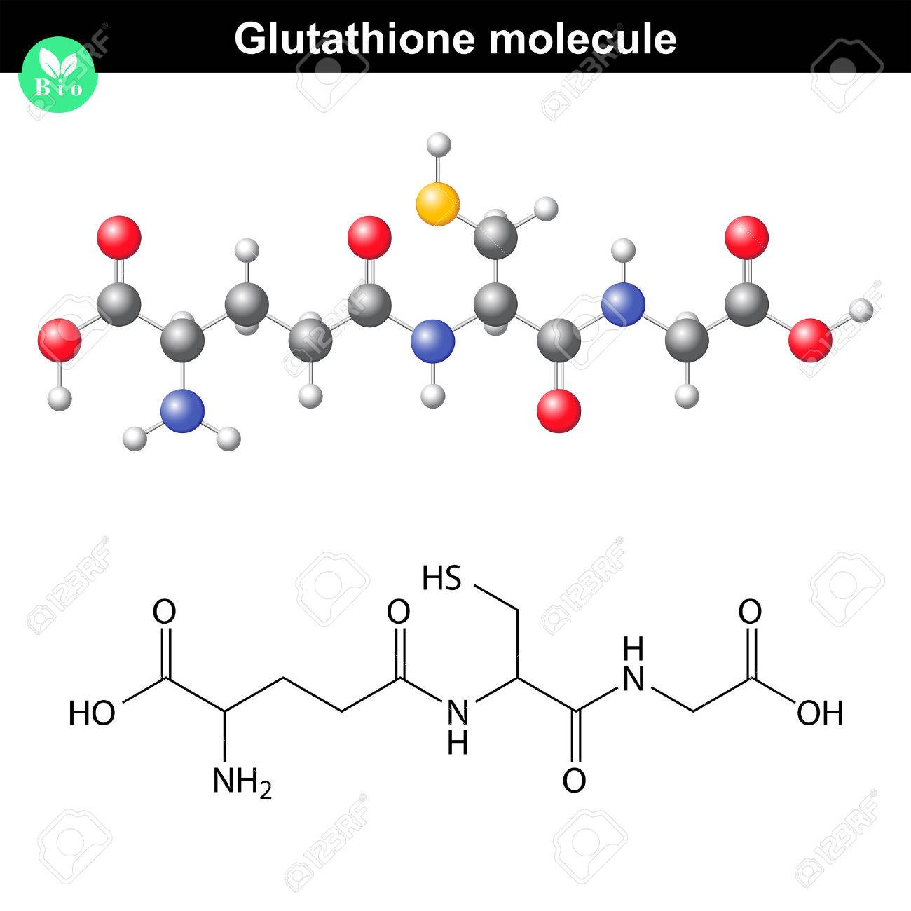 Glutathione chemical molecule - antioxidant and regulator and indicator of cell oxidative stress, 2d and 3d vector models, eps 8 - 47554251