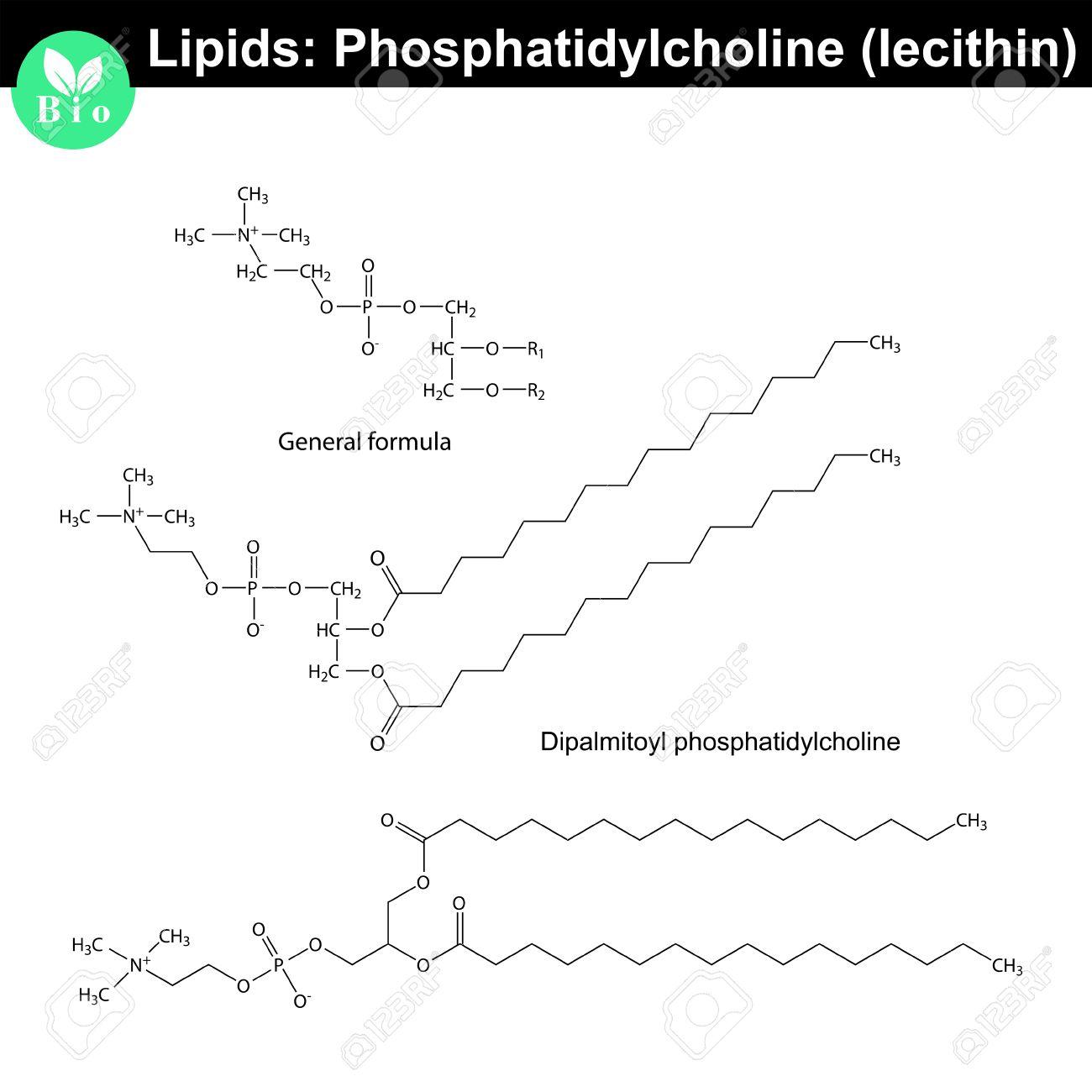 lecithin molecular structure chemical formulas of lipids