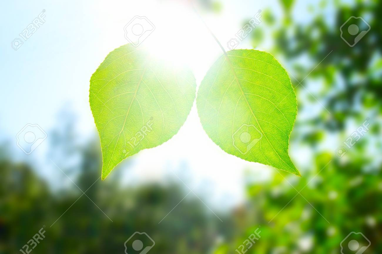 Two leafes in green forest. North nature. Summer. Stock Photo - 7645486