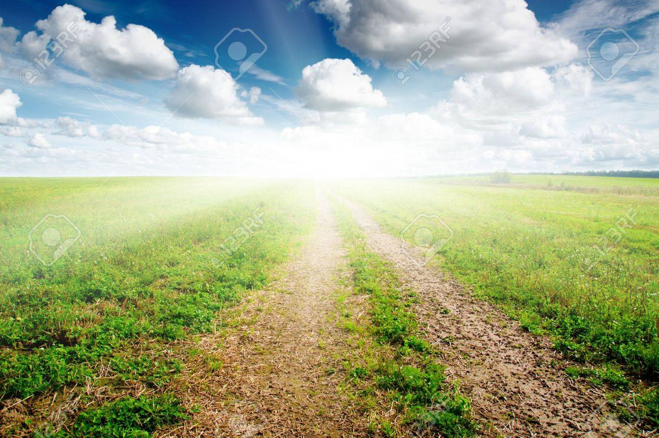 Green field under midday sun. Rural road. Stock Photo - 7998368