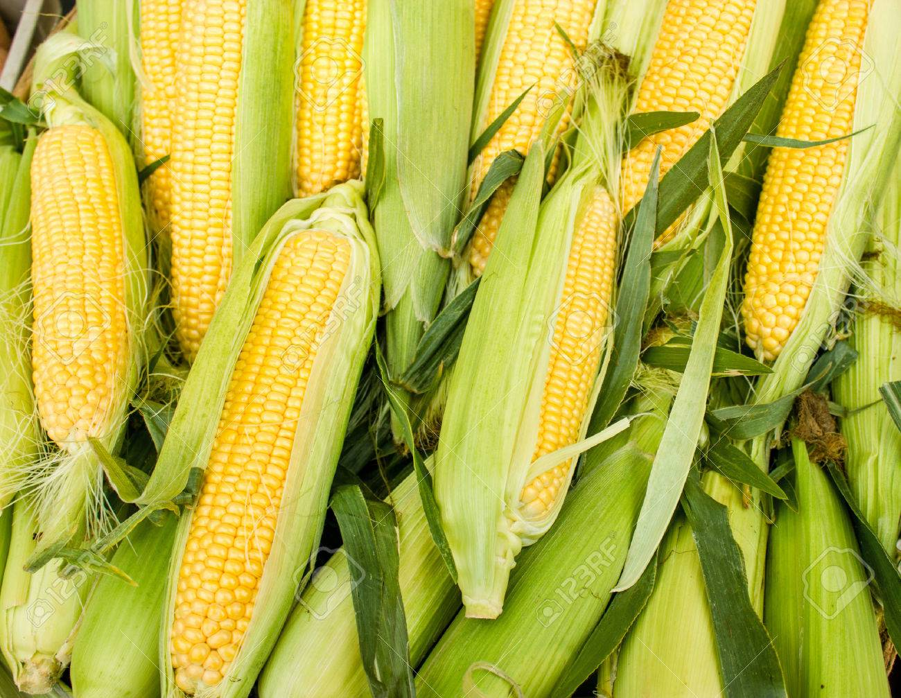 Fresh organic corn - 45670042