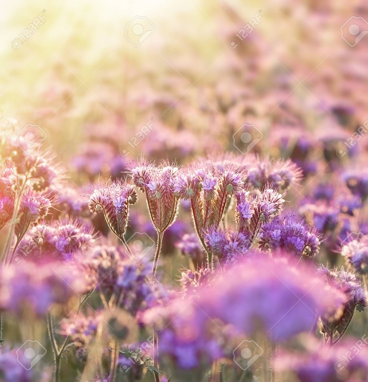 Beautiful purple flowers unusual flower stock photo picture and beautiful purple flowers unusual flower stock photo 54642004 izmirmasajfo
