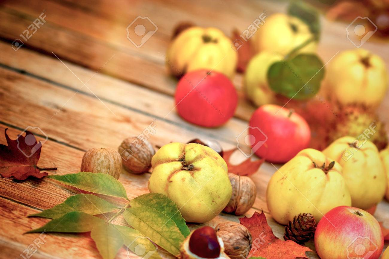 Autumn Harvest Seasonal Fruits Quince Apples Walnut And Stock Photo Picture And Royalty Free Image Image 62294819