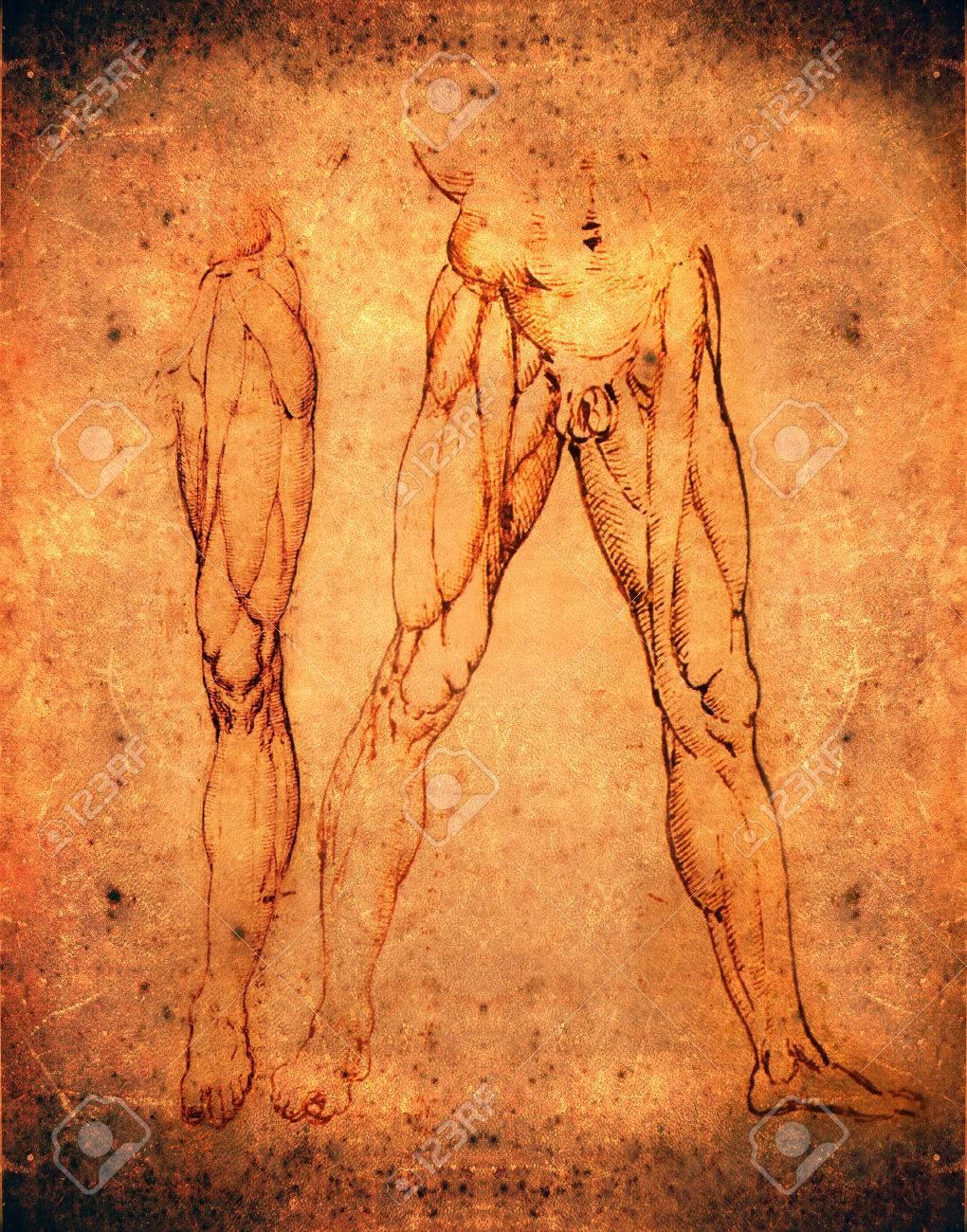 Leonardo Da Vinci Style Legs Anatomy Stock Photo, Picture And ...