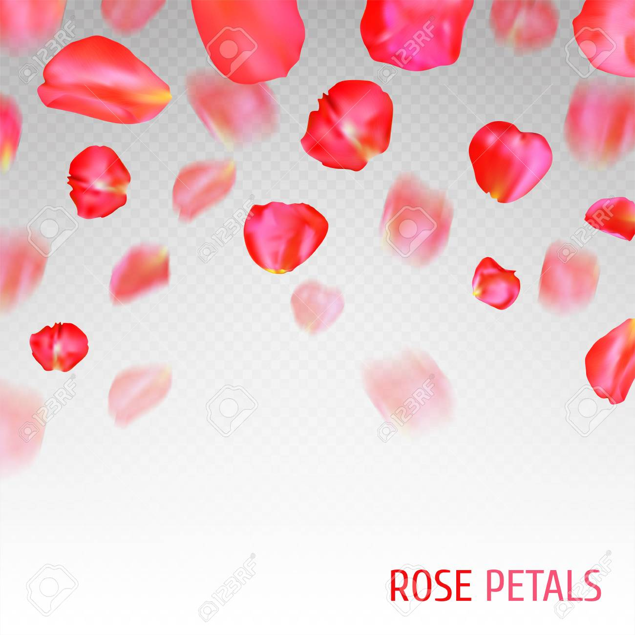 a lot of falling red rose petals on transparent background vector