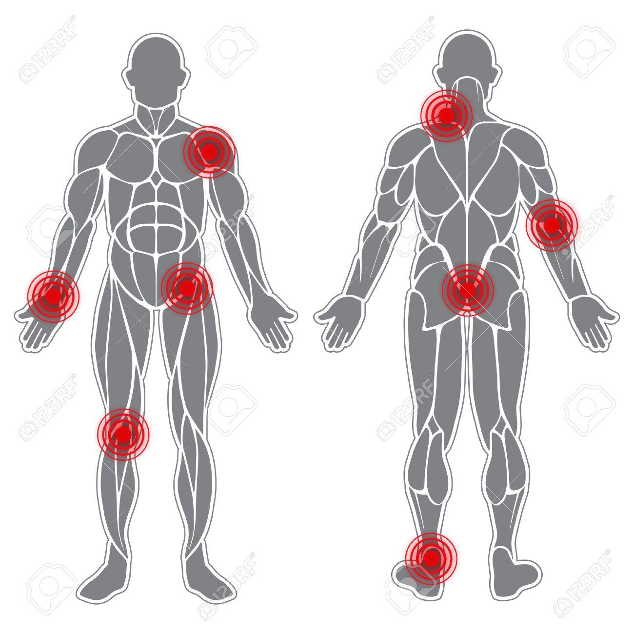 Tolle Muskeln Im Körper Diagramm Bilder - Menschliche Anatomie ...