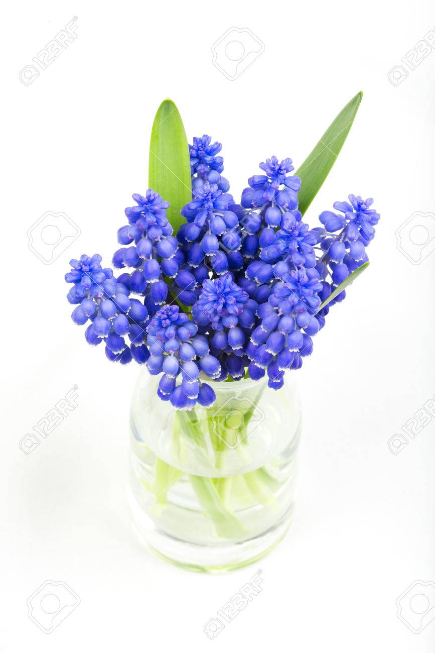 Vase with small bouquet of grape hyacinth flowers stock photo vase with small bouquet of grape hyacinth flowers stock photo 29011133 dhlflorist Choice Image