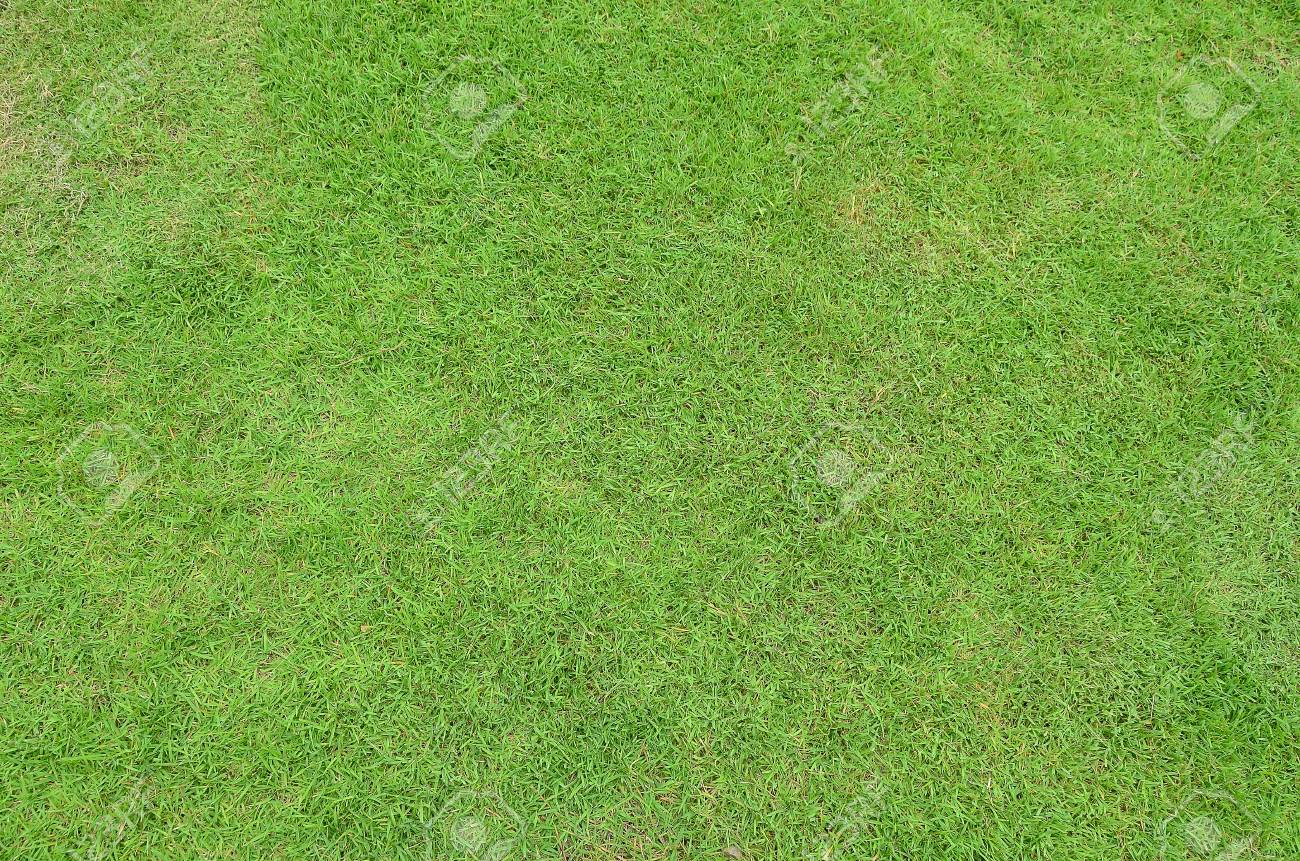 Lawn Grass Garden Green Park Background Wallpaper Summer Nature Stock Photo Picture And Royalty Free Image Image 80426530