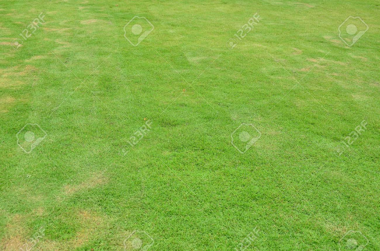 Lawn Grass Garden Green Park Background Wallpaper Summer Nature Stock Photo Picture And Royalty Free Image Image 80414142