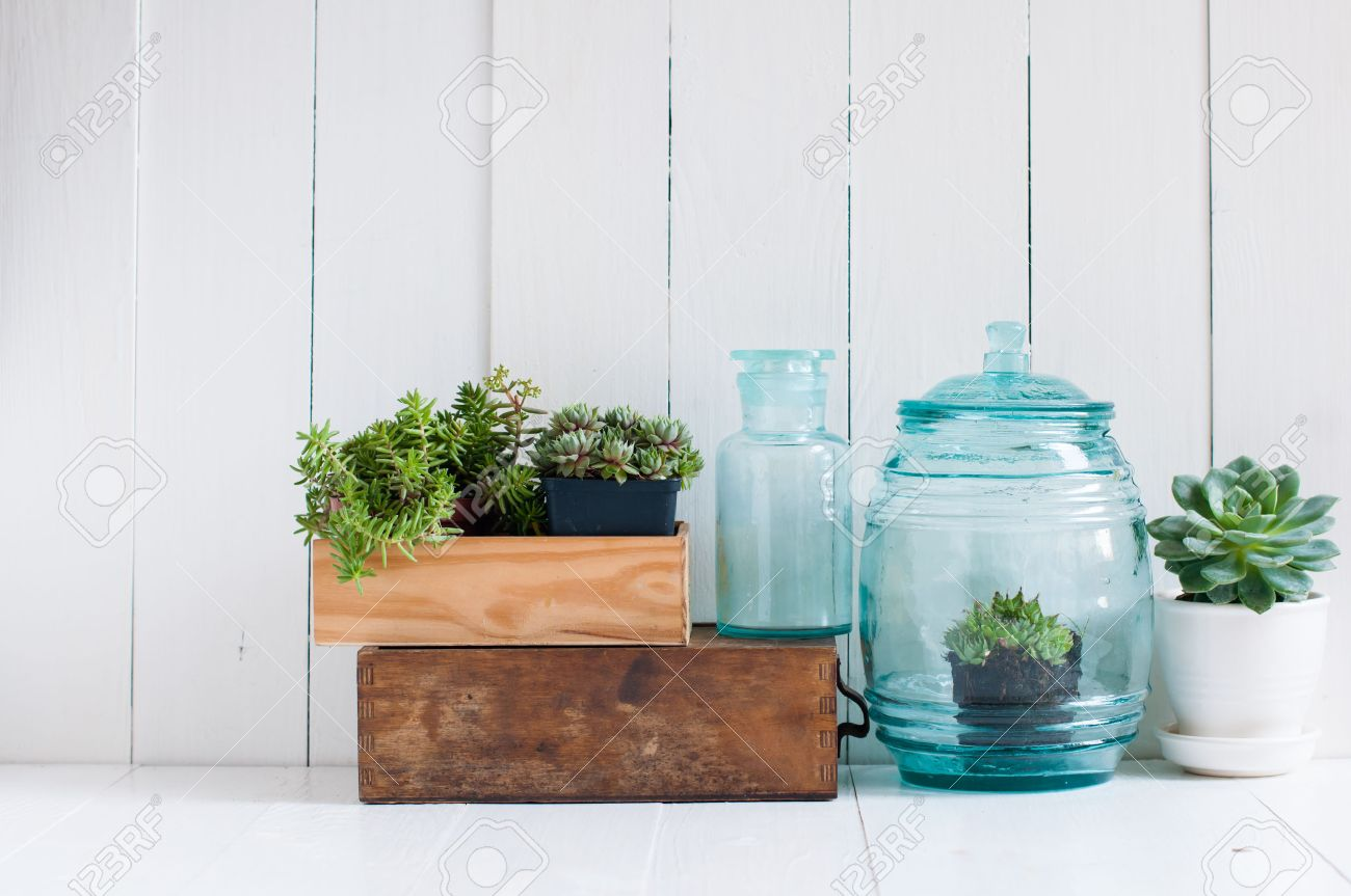 Stock Photo Vintage Home Decor Houseplants Green Succulents Old Wooden Boxes And Vintage Blue Glass Bottles On White Wooden Board Cozy Home Interior