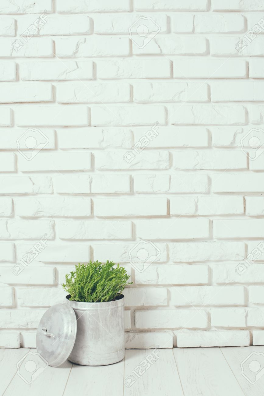Green Home Plant Near The White Brick Wall On Floor Rustic Interior Decor