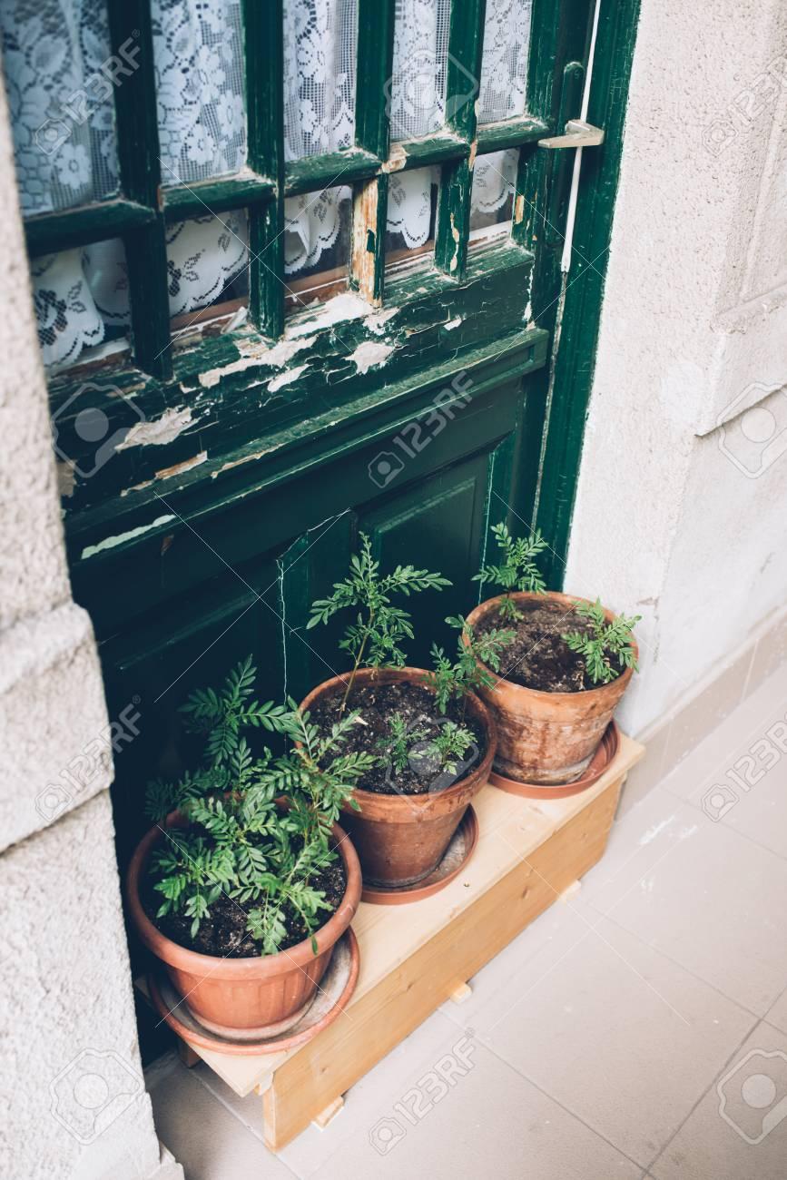 Home Plants And Herbs In Pots On Old House Veranda, Vintage Door Stock  Photo