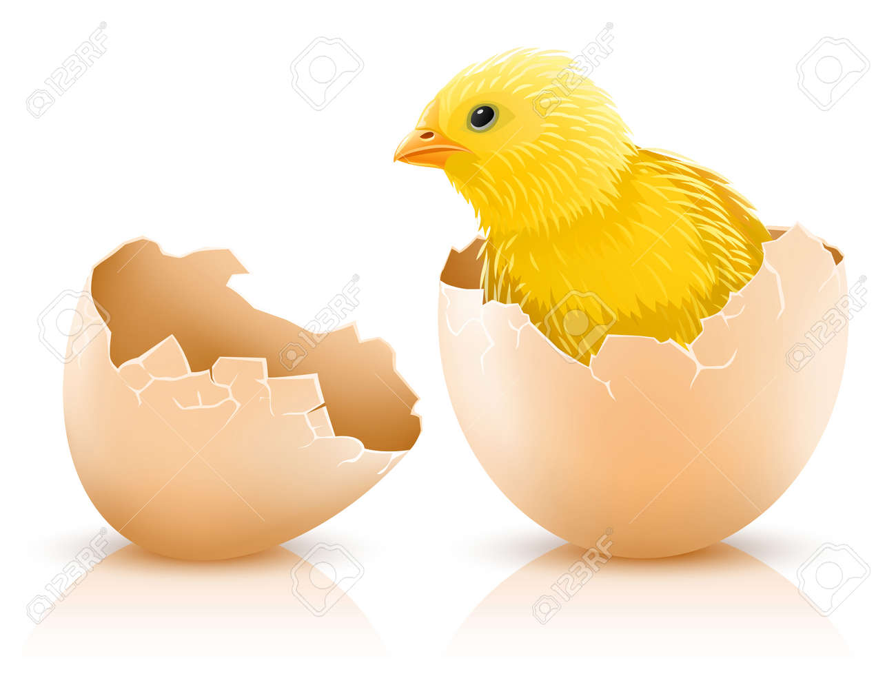 cracked hen's egg with chicken baby inside - vector illustration - 4568684