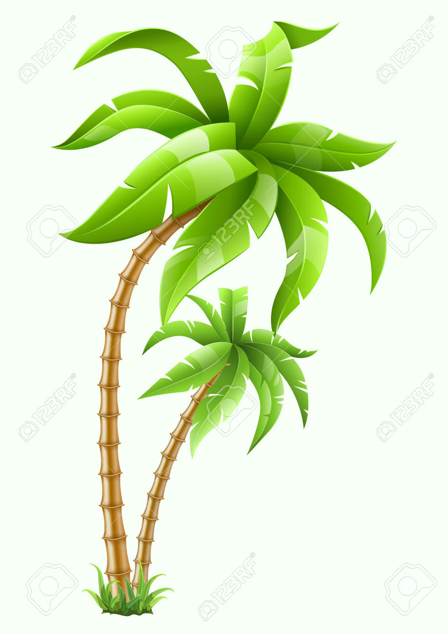 two tropical palms isolated on white background illustration. Stock Vector - 13855281