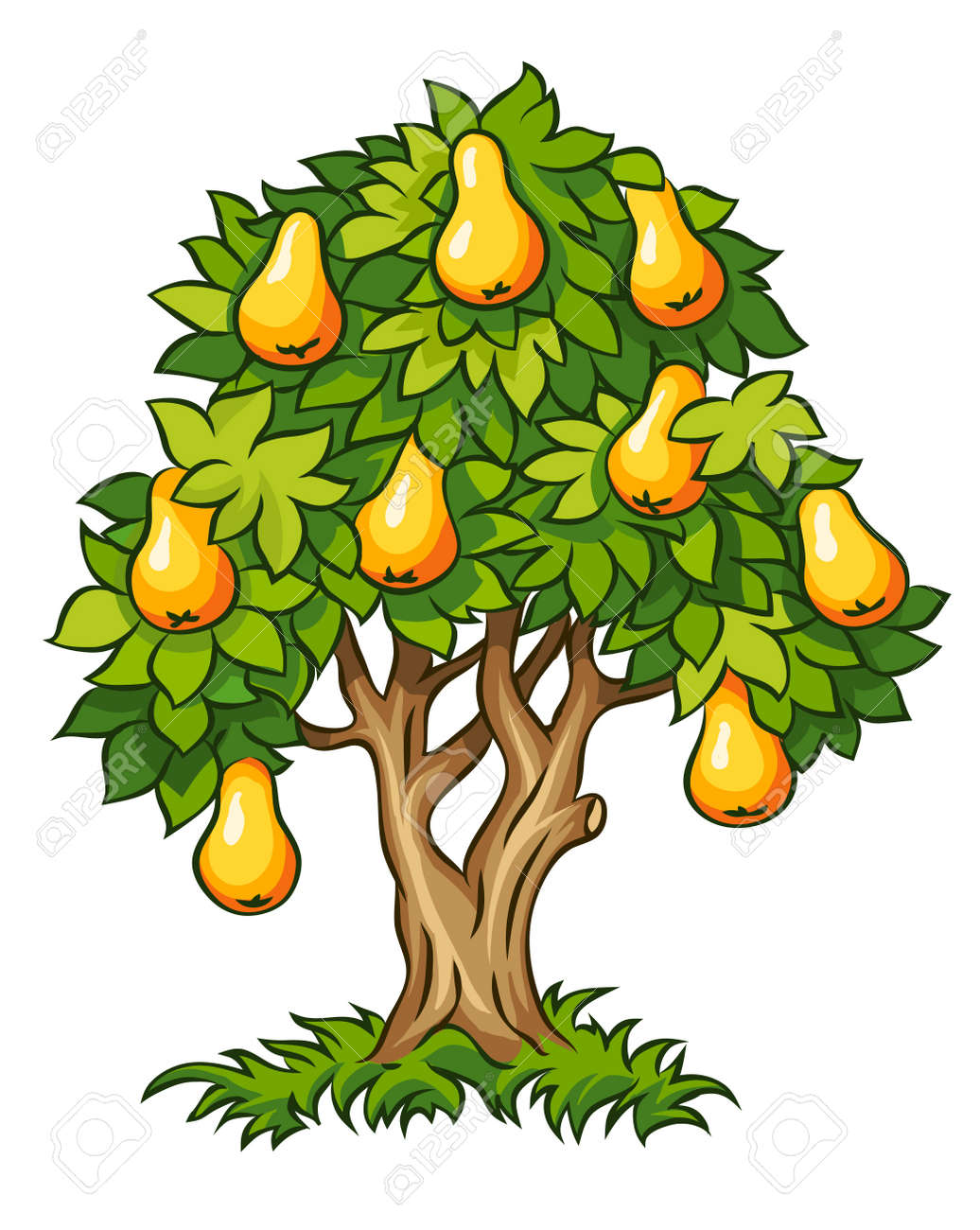 pear tree with ripe fruits illustration isolated on white background Stock Vector - 14646518
