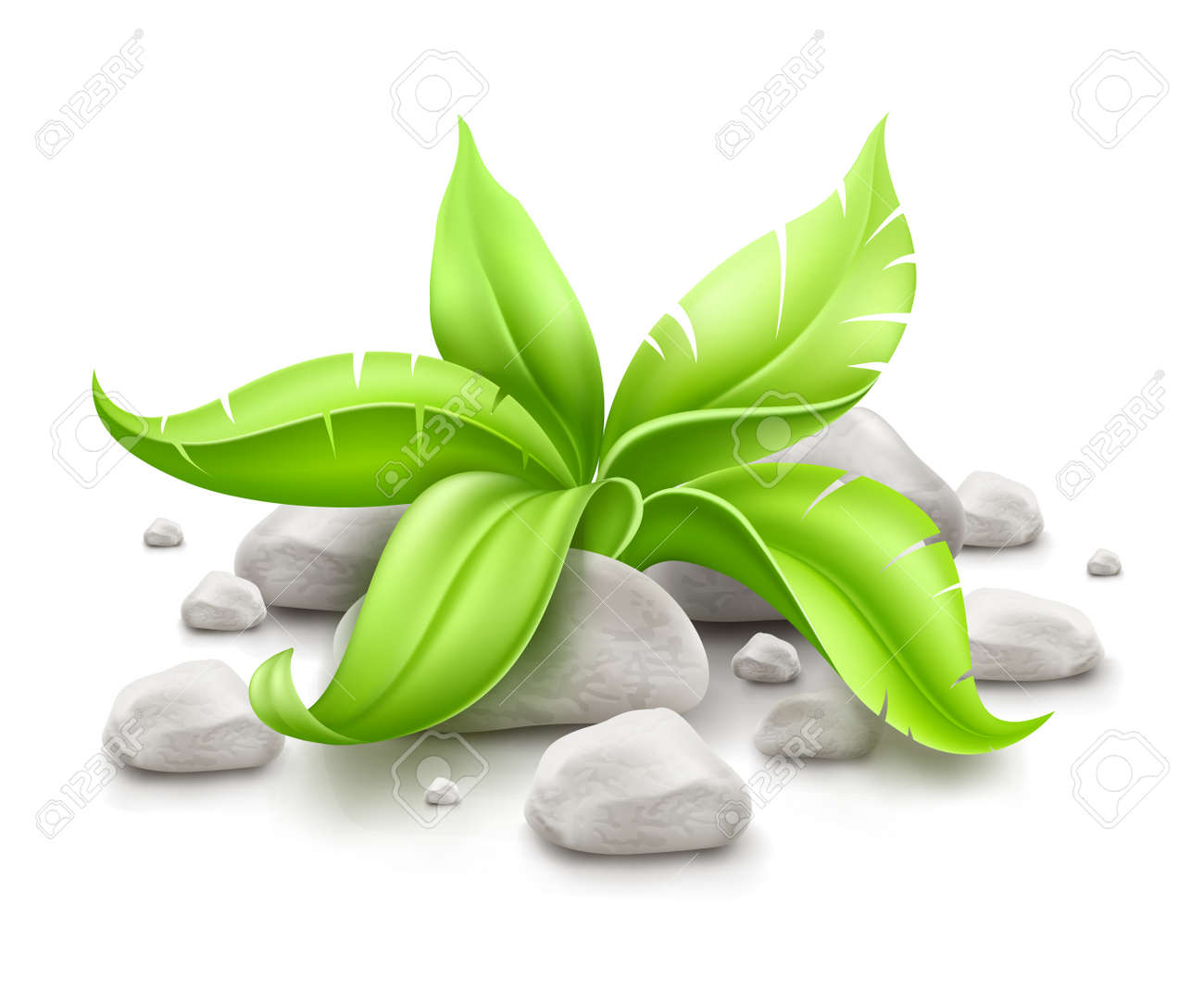 plant with green leaves in stones isolated on white background. EPS10 vector illustration. Gradient mesh used. Transparent objects used for shadows drawing. Stock Vector - 18703113