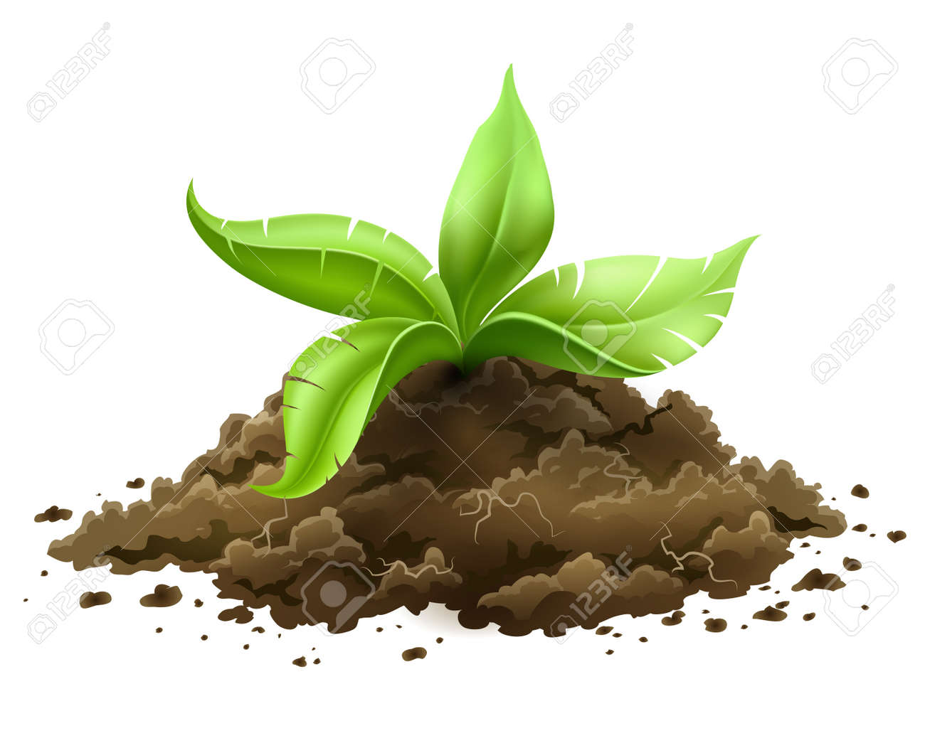 plant with green leaves growing from the ground isolated on white background Stock Vector - 20059653