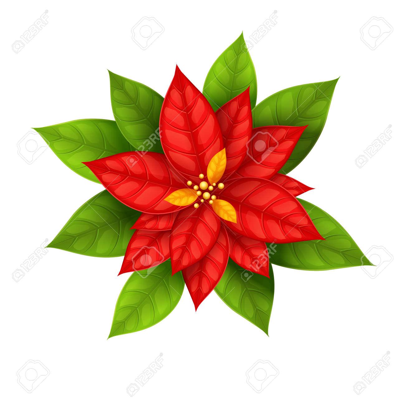 Red Weihnachtsstern Blume Weihnachtsstern Auf Weißem Hintergrund ...
